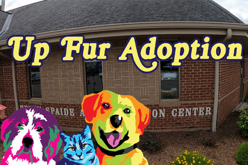 Up Fur Adoption Butler PA TV Show