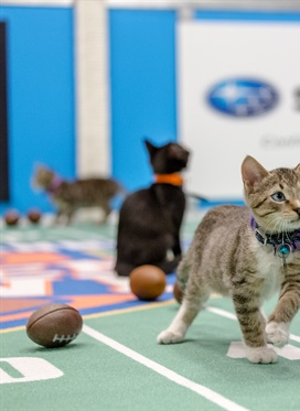 Hallmark Channel's Kitten Bowl IV